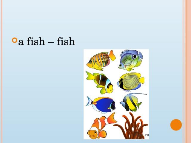 a fish – fish
