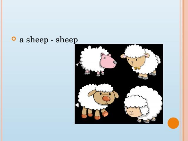a sheep - sheep