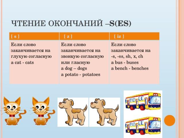 Чтение окончаний – s(es) [ s ]  [ z ] Если слово заканчивается на глухую согласную  [ iz ] a cat - cats Если слово заканчивается на звонкую согласную или гласную a dog – dogs Если слово заканчивается на -s, -ss, sh, x, ch a potato - potatoes a bus - buses a bench - benches