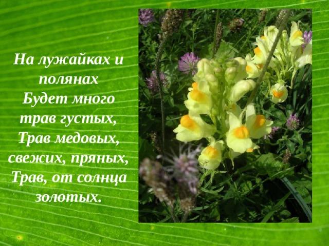 На лужайках и полянах Будет много трав густых, Трав медовых, свежих, пряных, Трав, от солнца золотых.