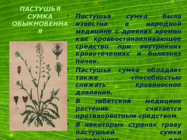 Пастушья сумка была известна в народной медицине с древних времен как кровеостанавливающее средство при внутренних кровотечениях и болезнях почек. Пастушья сумка обладает также способностью снижать кровеносное давление. В тибетской медицине растение считается противорвотным средством. В некоторых странах траву пастушьей сумки используют для приготовления борщей, супов, в свежем и сухом виде.
