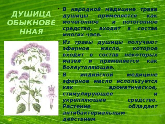 В народной медицине трава душицы применяется как мочегонное и потогонное средство, входит в состав многих чаев. Из травы душицы получают эфирное масло, которое входит в состав некоторых мазей и применяется как болеутоляющее. В индийской медицине эфирное масло используется как ароматическое, стимулирующее и укрепляющее средство. Растение обладает антибактериальным действием .
