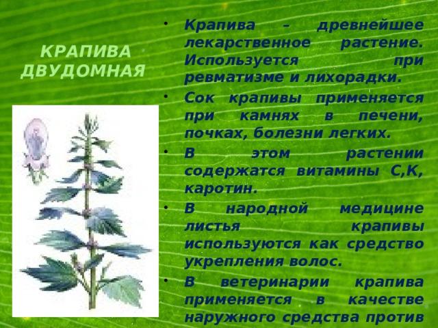 Крапива – древнейшее лекарственное растение. Используется при ревматизме и лихорадки. Сок крапивы применяется при камнях в печени, почках, болезни легких. В этом растении содержатся витамины С,К, каротин. В народной медицине листья крапивы используются как средство укрепления волос. В ветеринарии крапива применяется в качестве наружного средства против гангрены и гноящих ран .
