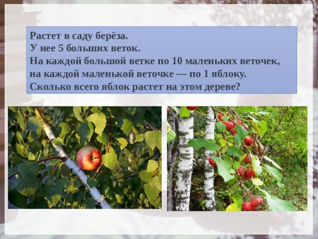 Растет в саду берёза.  У нее 5 больших веток.  На каждой большой ветке по 10 маленьких веточек,  на каждой маленькой веточке — по 1 яблоку.  Сколько всего яблок растет на этом дереве?