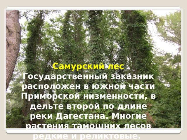 Самурский лес Государственный заказник расположен в южной части Приморской низменности, в дельте второй по длине реки Дагестана. Многие растения тамошних лесов редкие и реликтовые.