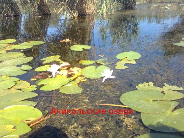 Ачикольские озера