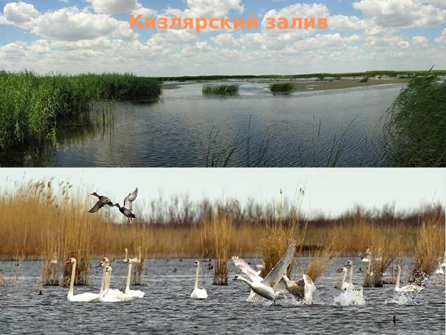 Кизлярский залив