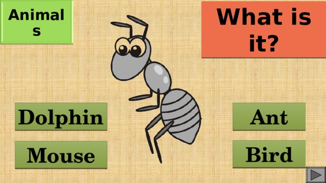 Animals What is it? Ant Dolphin Bird Mouse