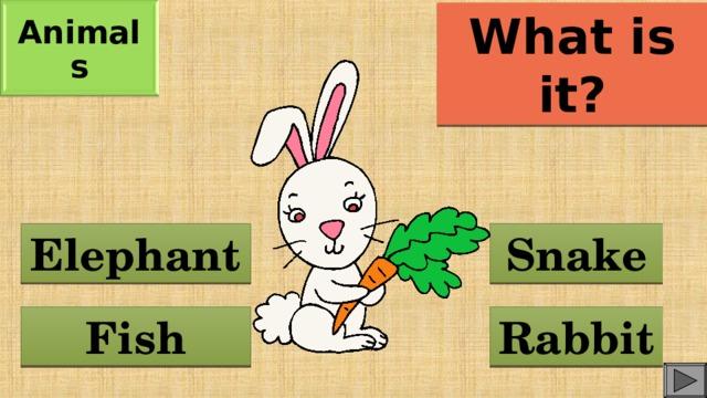 Animals What is it? Elephant Snake Fish Rabbit