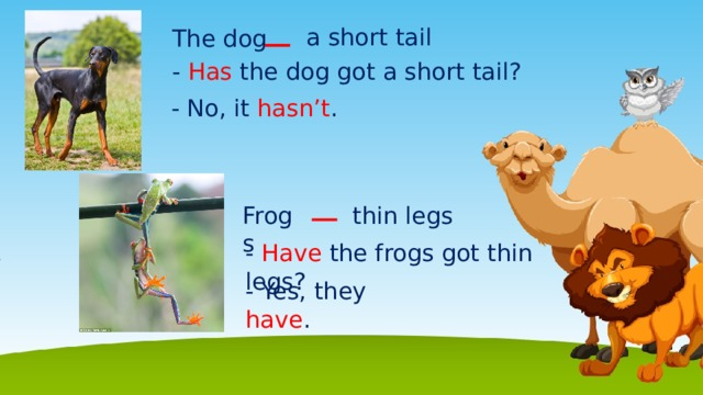 a short tail The dog - Has the dog got a short tail? - No, it hasn't . Frogs thin legs - Have the  frogs got thin legs? - Yes, they have .