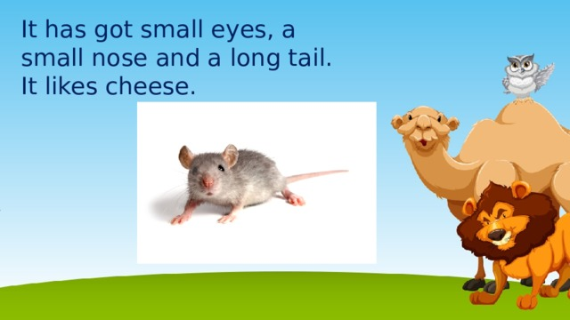 It has got small eyes, a small nose and a long tail. It likes cheese.
