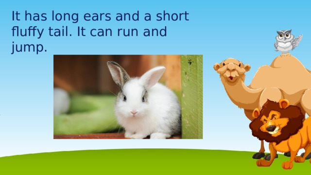 It has long ears and a short fluffy tail. It can run and jump.