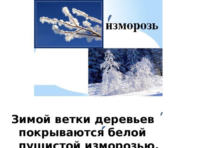 Зимой ветки деревьев покрываются белой пушистой изморозью.