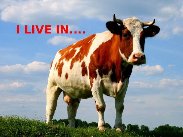I LIVE IN....