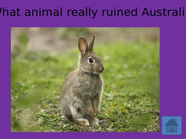 What animal really ruined Australia?