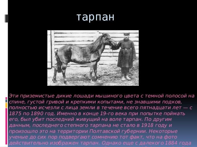 тарпан Эти приземистые дикие лошади мышиного цвета с темной полосой на спине, густой гривой и крепкими копытами, не знавшими подков, полностью исчезли с лица земли в течение всего пятнадцати лет — с 1875 по 1890 год. Именно в конце 19-го века при попытке поймать его, был убит последний живущий на воле тарпан. По другим данным, последнего степного тарпана не стало в 1918 году и произошло это на территории Полтавской губернии. Некоторые ученые до сих пор подвергают сомнению тот факт, что на фото действительно изображен тарпан. Однако еще с далекого 1884 года этот снимок считается единственной прижизненной фотографией тарпана.