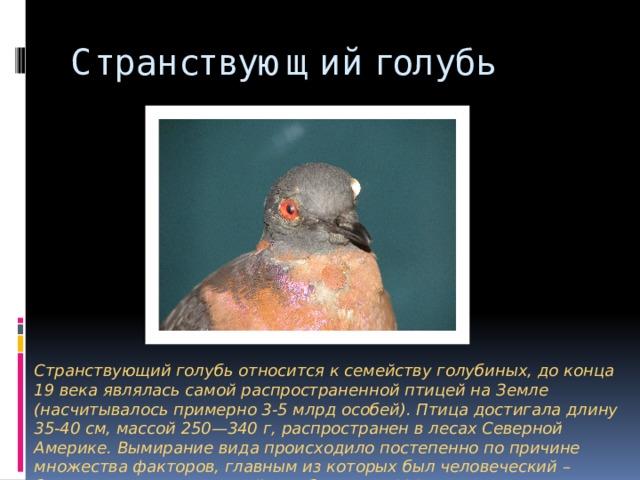 Странствующий голубь Странствующий голубь относится к семейству голубиных, до конца 19 века являлась самой распространенной птицей на Земле (насчитывалось примерно 3-5 млрд особей). Птица достигала длину 35-40 см, массой 250—340 г, распространен в лесах Северной Америке. Вымирание вида происходило постепенно по причине множества факторов, главным из которых был человеческий – браконьерство. Последний голубь умер в 1914 году в зоологическом саду (США).