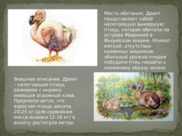 Место обитания. Дронт представляет собой нелетающую вымершую птицу, которая обитала на острове Маврикий в Индийском океане. Климат мягкий, отсутствие наземных хищников, обильный урожай плодов побудили птиц перейти к наземному образу жизни. Внешнее описание. Дронт – нелетающая птица, размером с индюка имевшая огромный клюв. Предполагается, что взрослая птица, весила 20-25 кг (для сравнения масса индюка 12-16 кг) в высоту достигала метра.