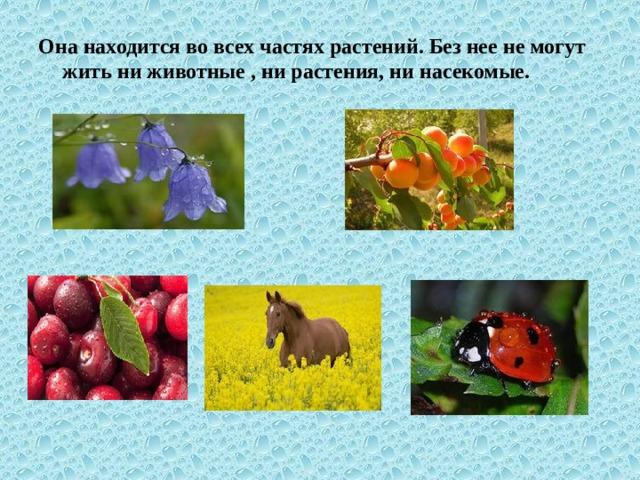 Она находится во всех частях растений. Без нее не могут жить ни животные , ни растения, ни насекомые.