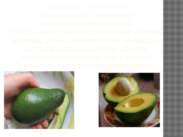 Авокадо – это фрукт  Авокадоещё называют Аллигаторовой грушей.  Плодыавокадогрушевидной формы, длиной до 20 сантиметров. Покрыты несъедобной кожурой. Внутри находится плотная как у груши мякоть и одна большая косточка.