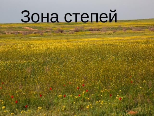 Зона степей