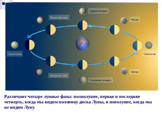 Различают четыре лунные фазы: полнолуние, первая и последняя четверть, когда мы видим половину диска Луны, и новолуние, когда мы не видим Луну.