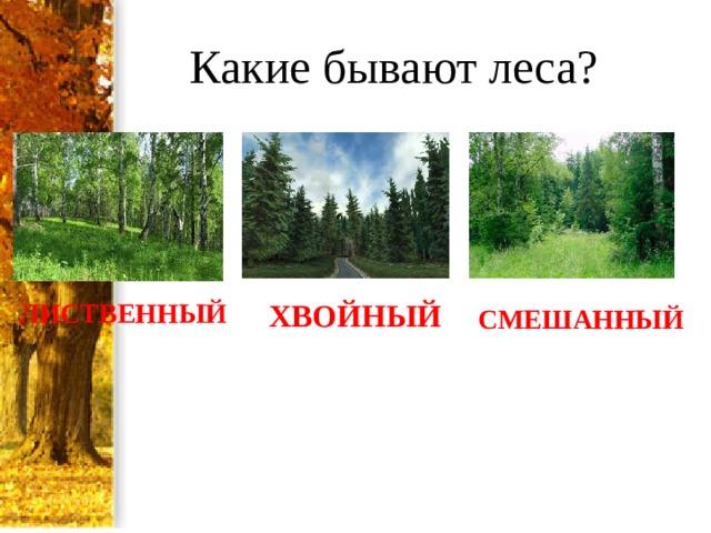 Какие бывают леса? ЛИСТВЕННЫЙ ХВОЙНЫЙ СМЕШАННЫЙ