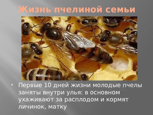 Жизнь пчелиной семьи