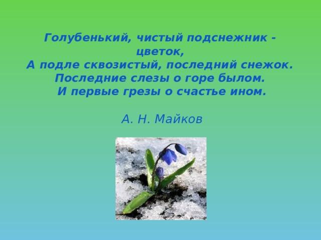 Голубенький, чистый подснежник - цветок,  А подле сквозистый, последний снежок.  Последние слезы о горе былом.  И первые грезы о счастье ином.    А. Н. Майков
