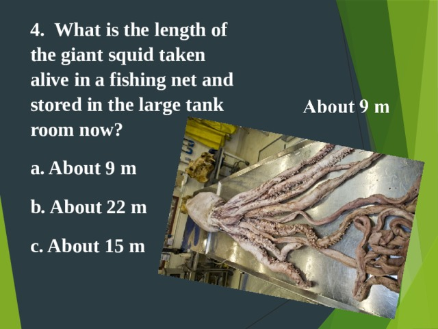 4.  What is the length of the giant squid taken alive in a fishing net and stored in the large tank room now? a. About 9 m b. About 22 m c. About 15 m