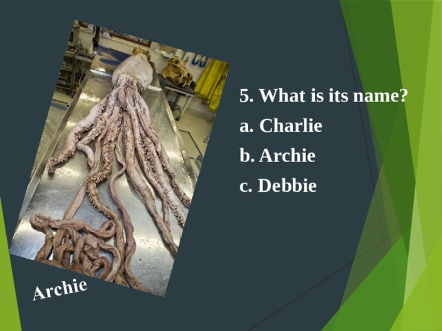 5. What is its name? a. Charlie b. Archie c. Debbie
