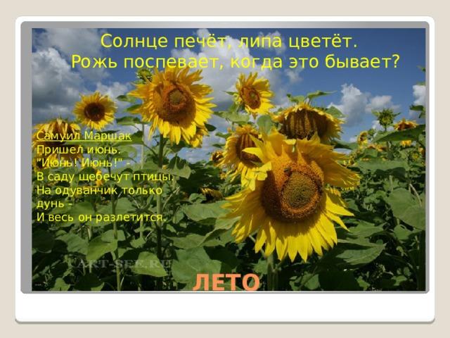 Солнце печёт, липа цветёт.  Рожь поспевает, когда это бывает?  Самуил Маршак Пришел июнь.