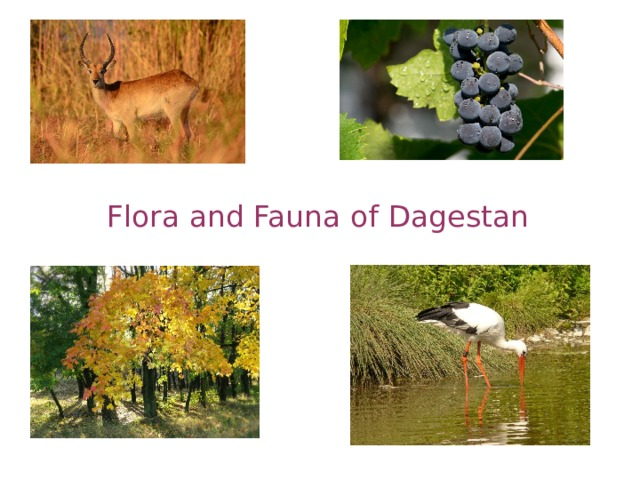 Flora and Fauna of Dagestan