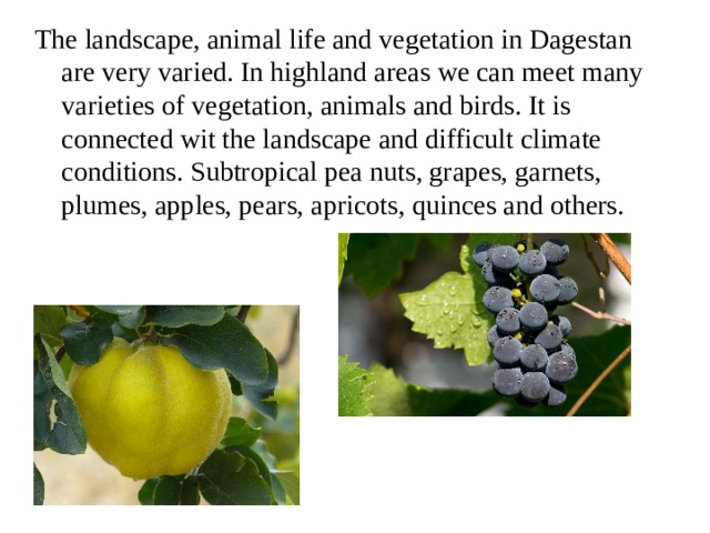 The landscape, animal life and vegetation in Dagestan are very varied. In highland areas we can meet many varieties of vegetation, animals and birds. It is connected wit the landscape and difficult climate conditions. Subtropical pea nuts, grapes, garnets, plumes, apples, pears, apricots, quinces and others.
