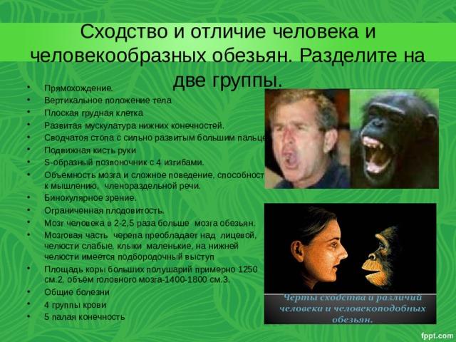 Сходство и отличие человека и человекообразных обезьян. Разделите на две группы.
