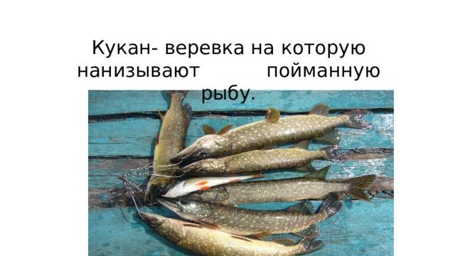 Кукан- веревка на которую нанизывают пойманную рыбу.