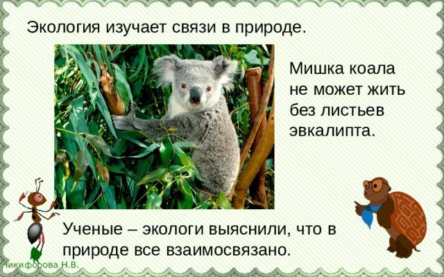 Экология изучает связи в природе. Мишка коала не может жить без листьев эвкалипта. Ученые – экологи выяснили, что в природе все взаимосвязано.