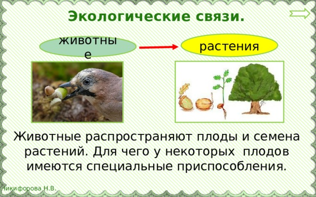 Экологические связи. растения животные Животные распространяют плоды и семена растений. Для чего у некоторых плодов имеются специальные приспособления.