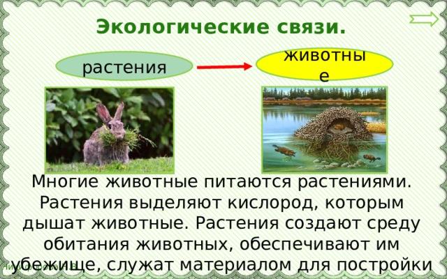 Экологические связи. животные растения Многие животные питаются растениями. Растения выделяют кислород, которым дышат животные. Растения создают среду обитания животных, обеспечивают им убежище, служат материалом для постройки жилищ.
