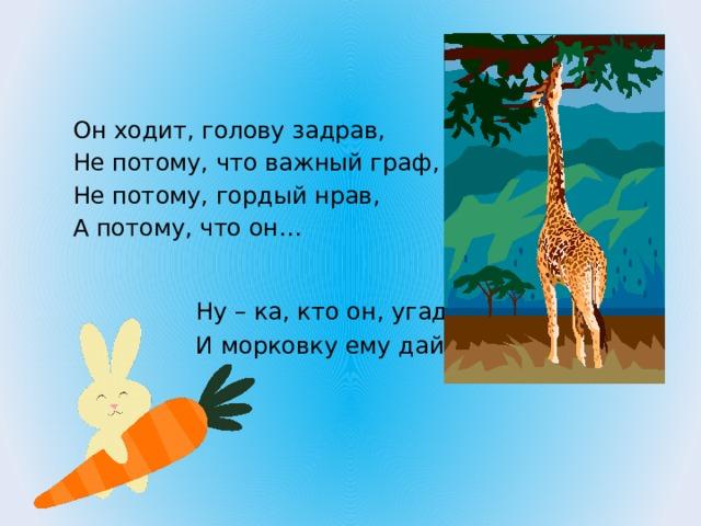 Он ходит, голову задрав, Не потому, что важный граф, Не потому, гордый нрав, А потому, что он… Ну – ка, кто он, угадай И морковку ему дай.