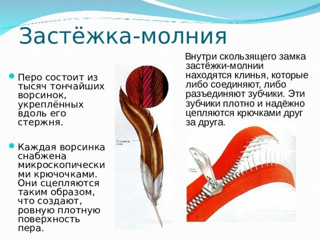 Застёжка-молния  Внутри скользящего замка застёжки-молнии находятся клинья, которые либо соединяют, либо разъединяют зубчики. Эти зубчики плотно и надёжно цепляются крючками друг за друга.