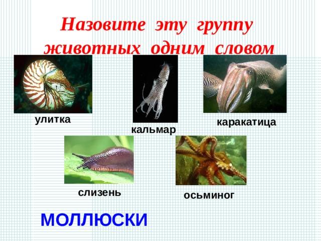 Назовите эту группу животных одним словом улитка каракатица кальмар слизень осьминог МОЛЛЮСКИ
