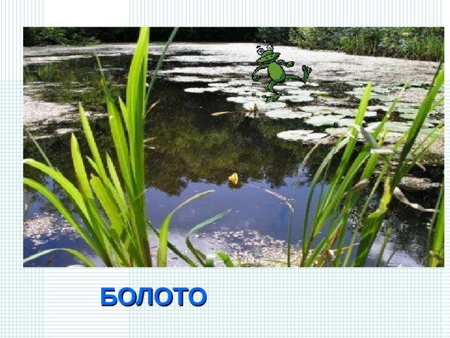 «Не море, не земля – корабли не плавают, и ходить нельзя».   О каком природном водоеме идет речь? БОЛОТО