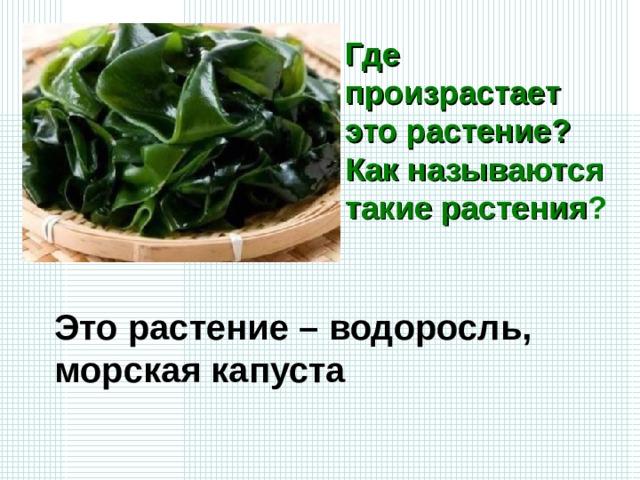 Где произрастает это растение? Как называются такие растения ? Это растение – водоросль, морская капуста