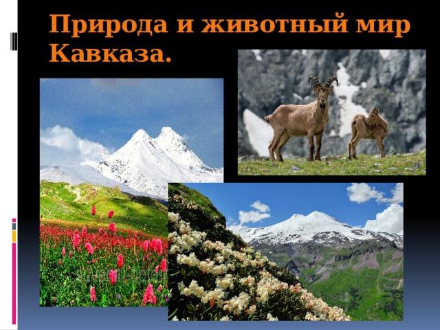 Природа и животный мир Кавказа.