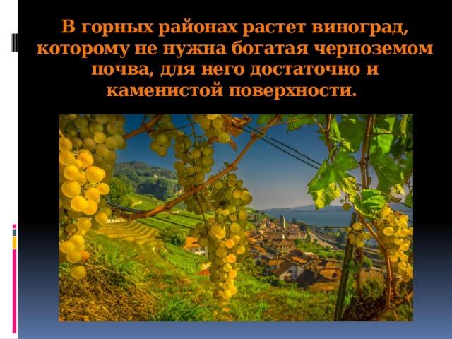В горных районах растет виноград, которому не нужна богатая черноземом почва, для него достаточно и каменистой поверхности.