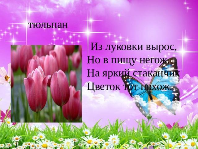 Из луковки вырос,  Но в пищу негож.  На яркий стаканчик  Цветок тот похож.  тюльпан