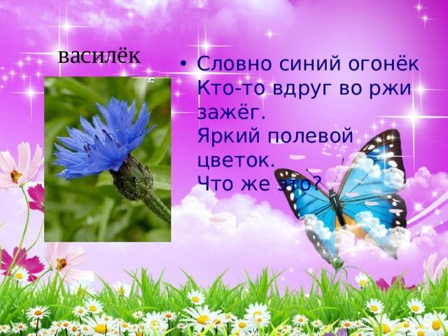 Словно синий огонёк  Кто-то вдруг во ржи зажёг.  Яркий полевой цветок.  Что же это?