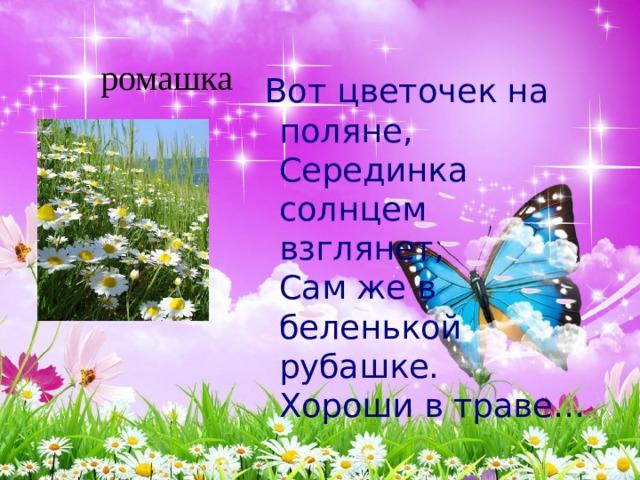 Вот цветочек на поляне,  Серединка солнцем взглянет,  Сам же в беленькой рубашке.  Хороши в траве…  ромашка