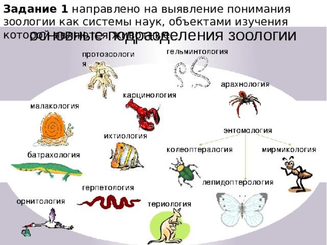 Задание 1 направлено на выявление понимания зоологии как системы наук, объектами изучения которой являются животные.